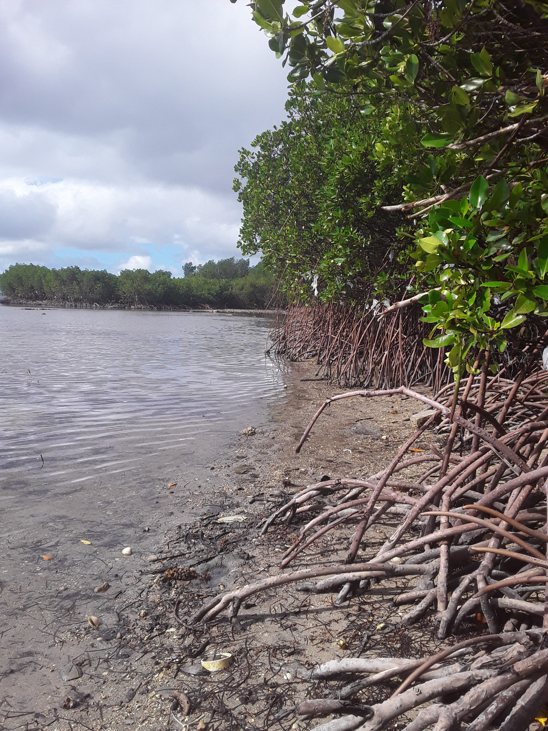 Experts share critical lessons on saving mangroves