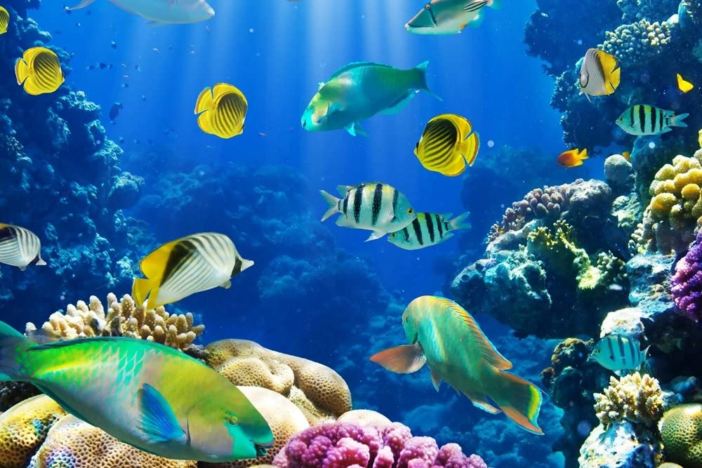 Life Below Water: Transparency and Innovation will Help Build Ocean Resilience