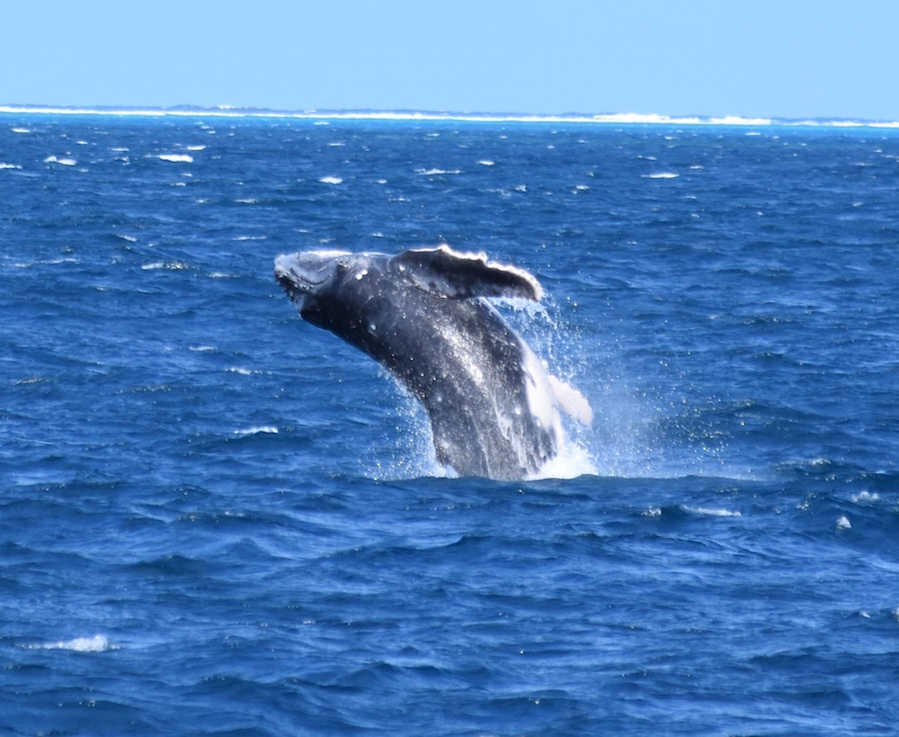 Report Reveals Positive Outcomes Of Special Management Areas On Marine Environment