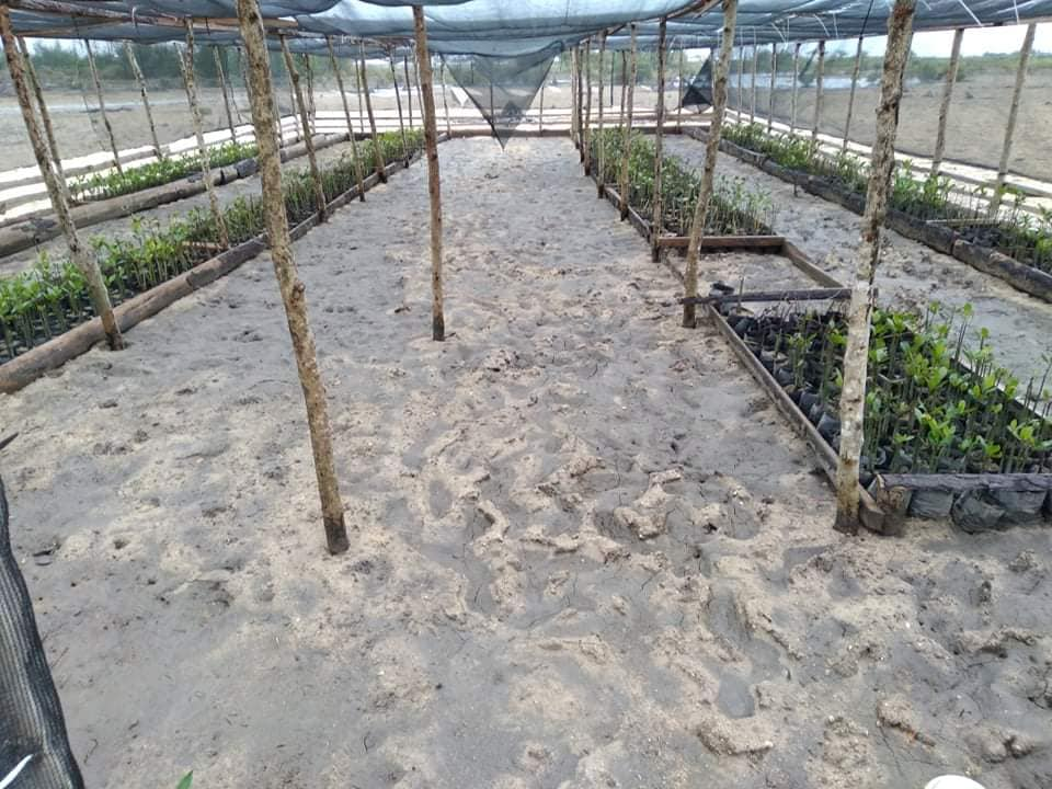 Terrestrial team continue with mangroves work
